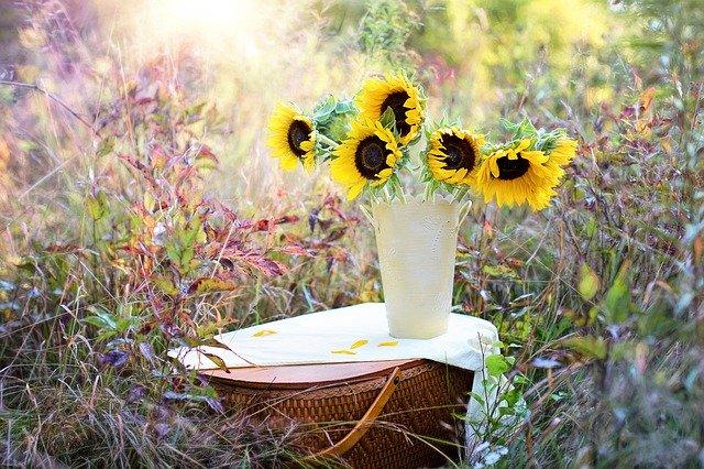 podzimní žluté slunečnice ve váze