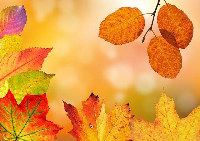 detail podzimního barevného listí